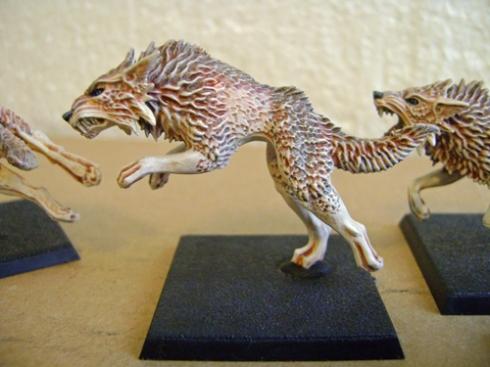 F Wolf 1